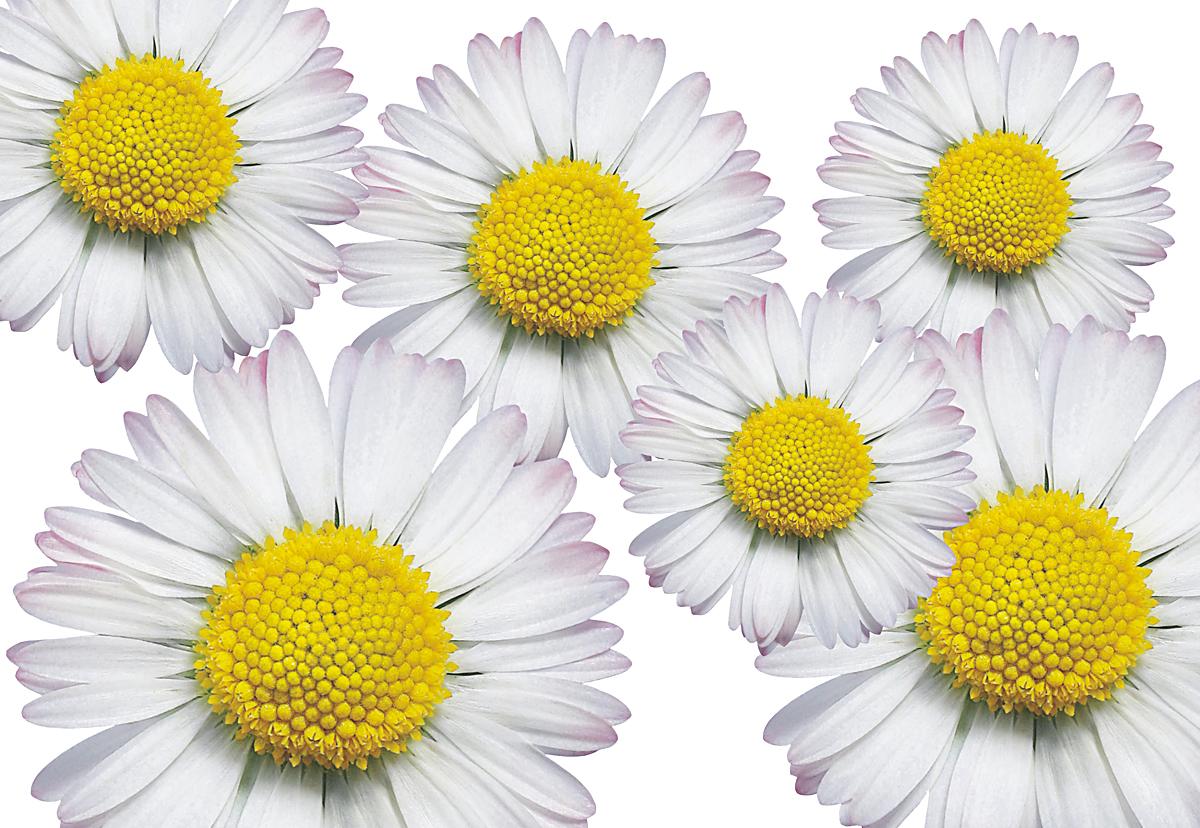 Autoaufkleber Aufkleber Hippie Blumen Reserveradcover